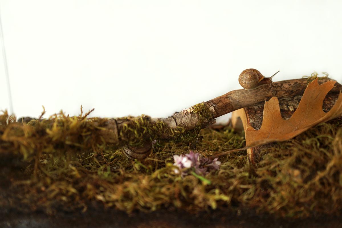 How To Make A Snail Habitat Woodlark Blog Woodlark